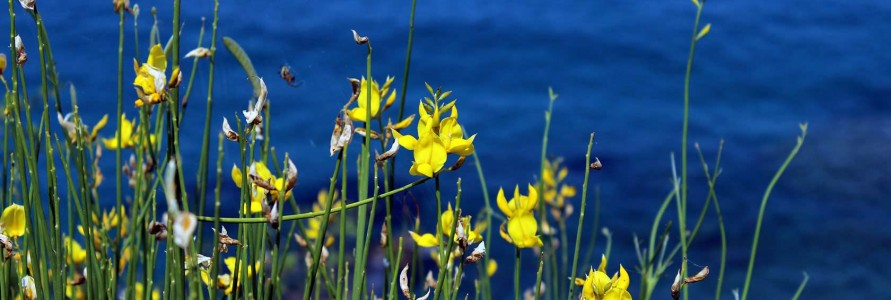 News from ANEMA hotel in Samos island, Flora of Samos island in Greece